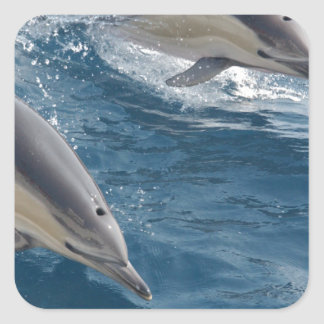 common-dolphins-914 square sticker