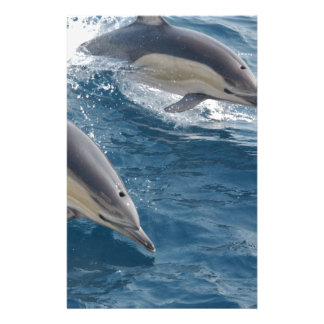common-dolphins-914 stationery