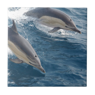 common-dolphins-914 small square tile