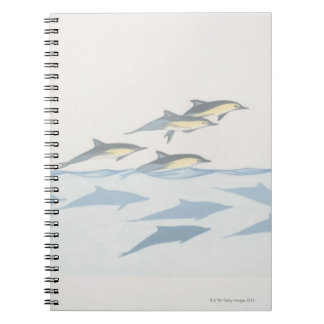 Common Dolphins Notebook