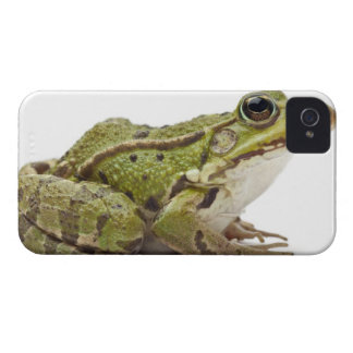 Common European frog or Edible Frog iPhone 4 Case-Mate Case