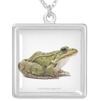 Common European frog or Edible Frog Silver Plated Necklace