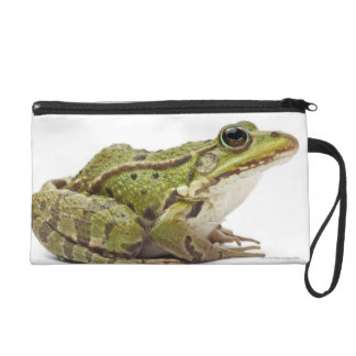 Common European frog or Edible Frog Wristlet