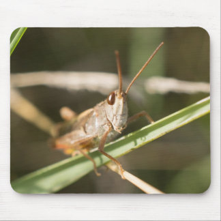 Common Field Grasshopper Mouse Mat