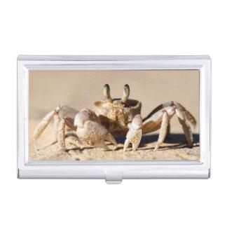 Common Ghost Crab (Ocypode Cordimana) Business Card Holder