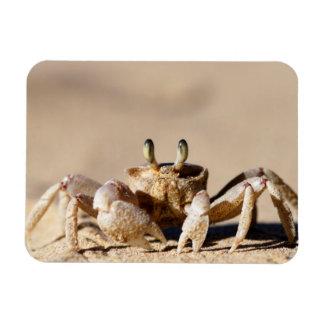 Common Ghost Crab (Ocypode Cordimana) Rectangular Photo Magnet