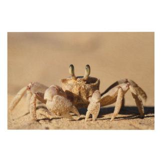 Common Ghost Crab (Ocypode Cordimana) Wood Print