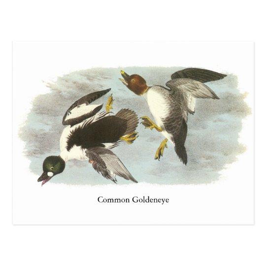 Common Goldeneye, John Audubon Postcard