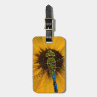 Common Green Darner male on Black-eyed Susan Bag Tags