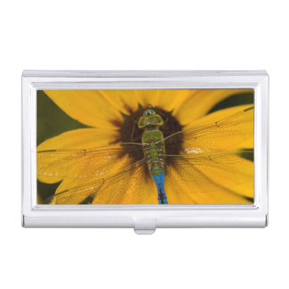 Common Green Darner male on Black-eyed Susan Business Card Holders