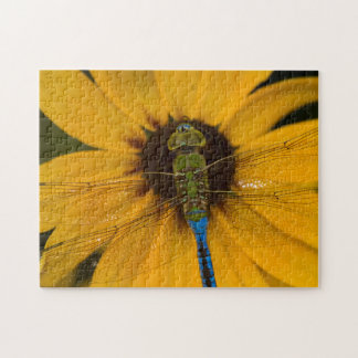 Common Green Darner male on Black-eyed Susan Jigsaw Puzzle