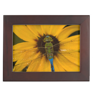 Common Green Darner male on Black-eyed Susan Keepsake Boxes