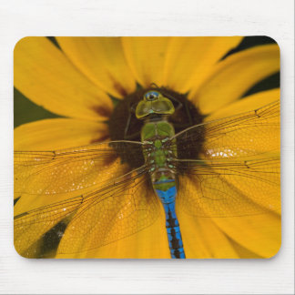 Common Green Darner male on Black-eyed Susan Mouse Mat