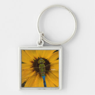 Common Green Darner male on Black-eyed Susan Silver-Colored Square Key Ring