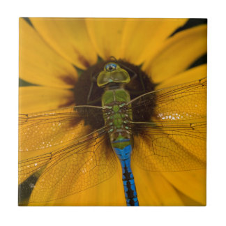Common Green Darner male on Black-eyed Susan Small Square Tile