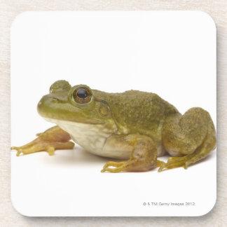 Common Green Frog Coaster