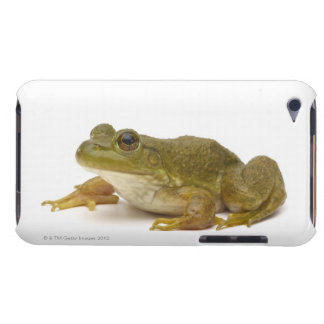 Common Green Frog iPod Case-Mate Cases