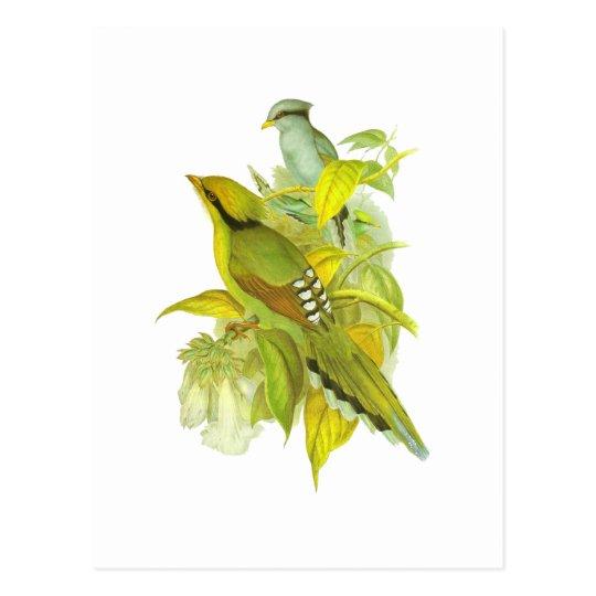 Common Green Magpie Postcard