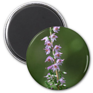 Common Heather (Calluna vulgaris) 6 Cm Round Magnet