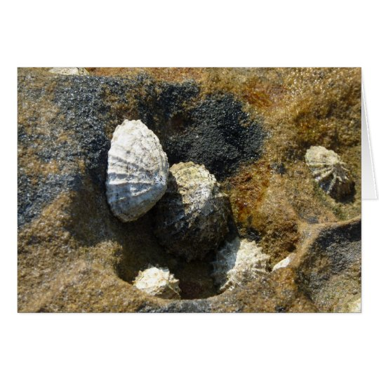 """Common Limpets"" (3) Card"