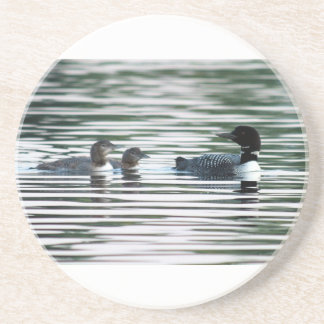 Common Loon Chicks Coaster