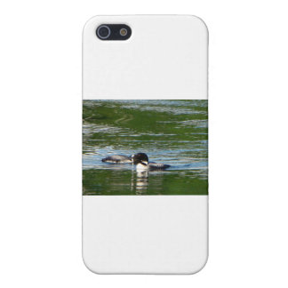 Common Loon Case For iPhone 5