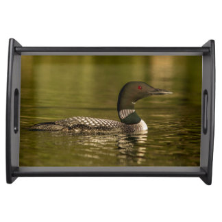 Common Loon Male On Beaver Lake Near Whitefish Serving Tray