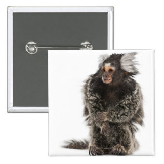 Common Marmoset - Callithrix jacchus (2 years 15 Cm Square Badge