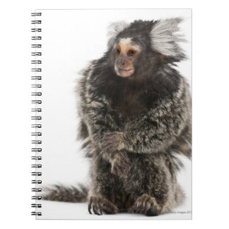 Common Marmoset - Callithrix jacchus (2 years Note Book