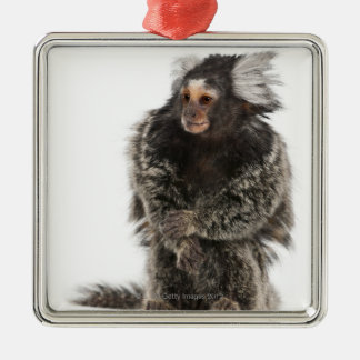 Common Marmoset - Callithrix jacchus (2 years Silver-Colored Square Decoration
