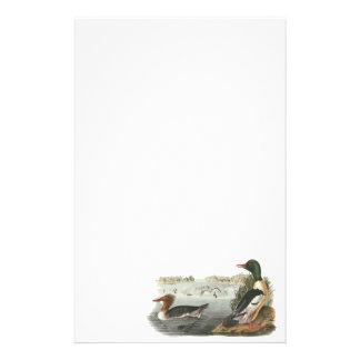 Common Merganser, John Audubon Stationery