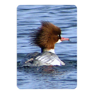 Common Merganser, With Its Magestic Crest 13 Cm X 18 Cm Invitation Card