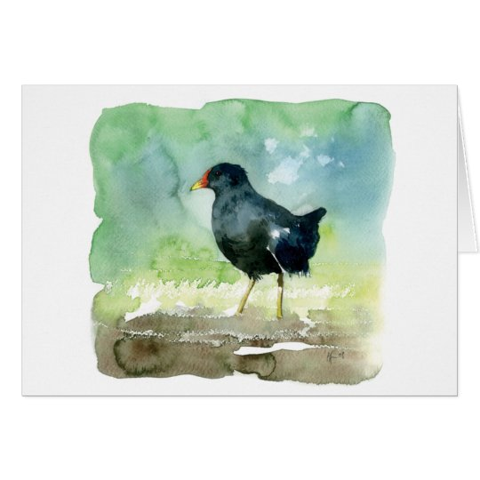 common moorhen card