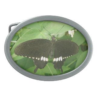 Common Mormon Butterfly Belt Buckle