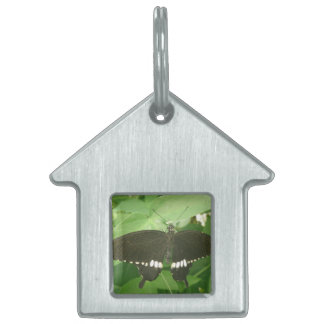 Common Mormon Butterfly Pet Tag