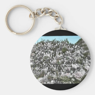 Common Murres Key Chains