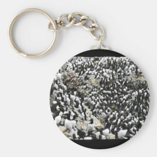 Common Murres Keychains