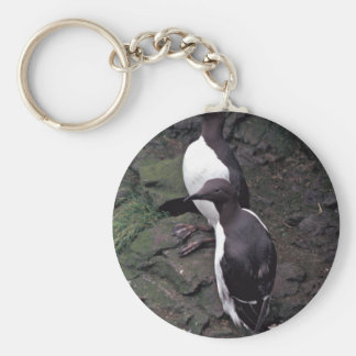 Common Murres on Hall Island Keychain