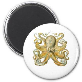 Common Octopus Magnet