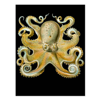 Common Octopus Postcard