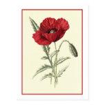 """Common Poppy"" Botanical Illustration Postcard"