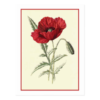 """Common Poppy"" Botanical Illustration Postcard"
