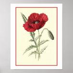 """Common Poppy"" Botanical Illustration Print"