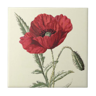"""Common Poppy"" Botanical Illustration Small Square Tile"