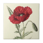 """Common Poppy"" Botanical Illustration Tiles"