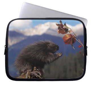 Common porcupine eating Alaskan high brush Laptop Sleeve