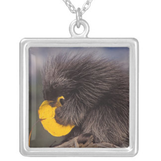 common porcupine, Erethizon dorsatum, baby Silver Plated Necklace