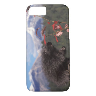Common porcupine feeding on high brush cranberry iPhone 8/7 case