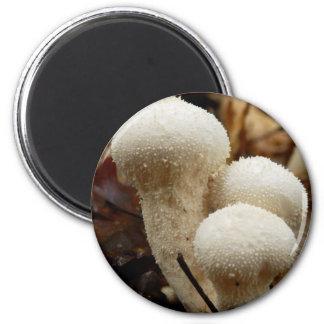 Common Puffball Mushroom Magnet