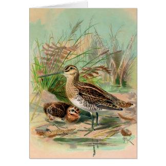 Common Snipe Vintage Bird Illustration Card